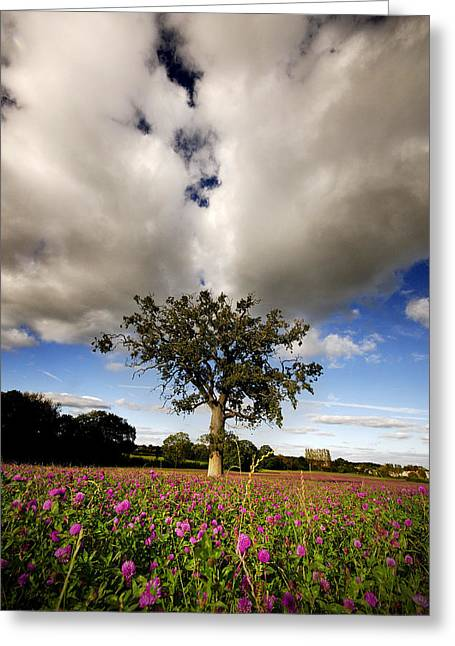 Greeting Card featuring the photograph Pink Drops by John Chivers