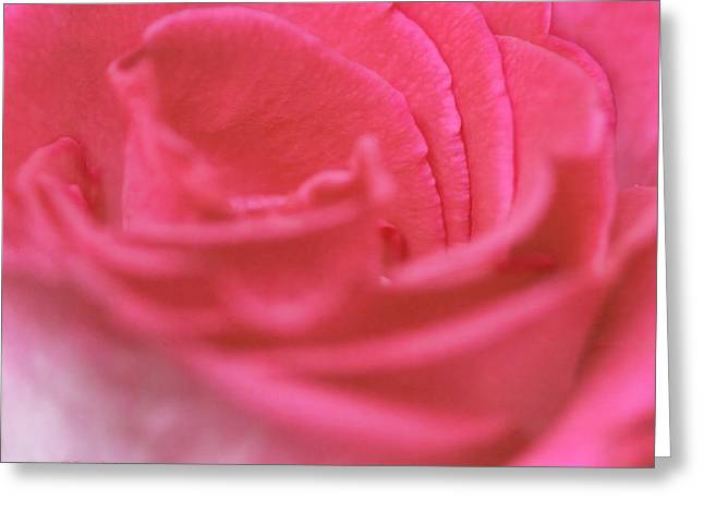 Greeting Card featuring the photograph Pink Edges by Joan Bertucci