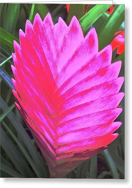 Pink Fan Greeting Card by Paul Washington