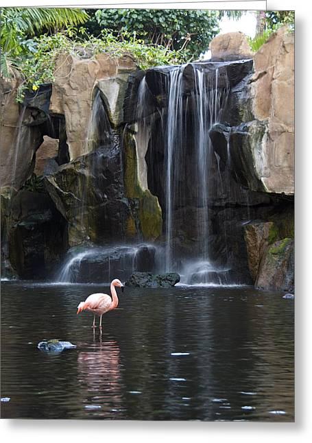 Pink Flamingo Greeting Card by Chris Ann Wiggins