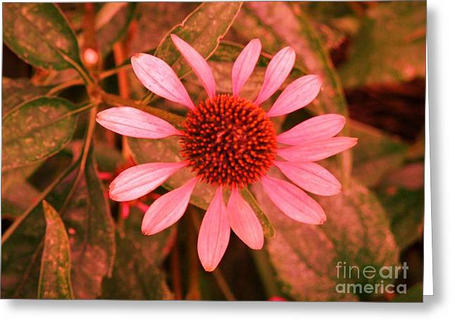 Pink Flower For Breast Cancer Awareness Month 2 Greeting Card by Artie Wallace