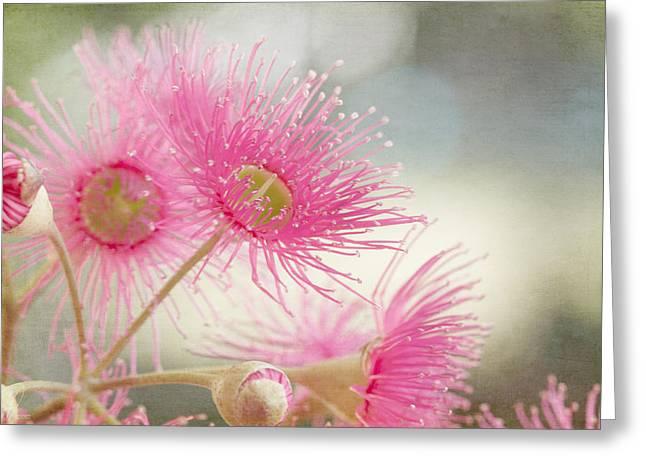 Pink Flowering Greeting Card