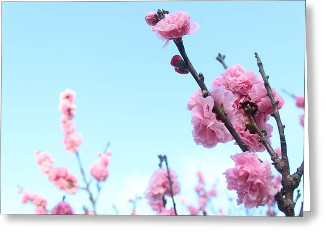Pink Flowers Greeting Card by Allen Jiang