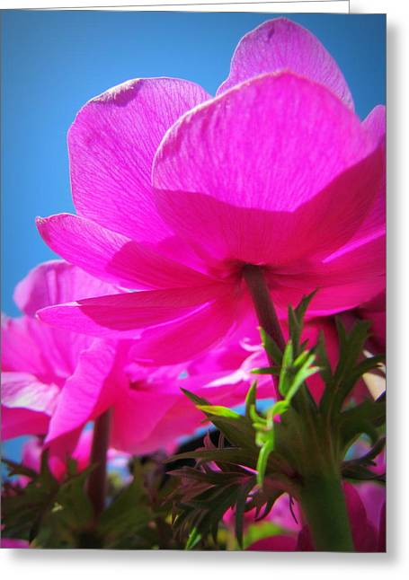 Pink Flowers In The Sky Greeting Card