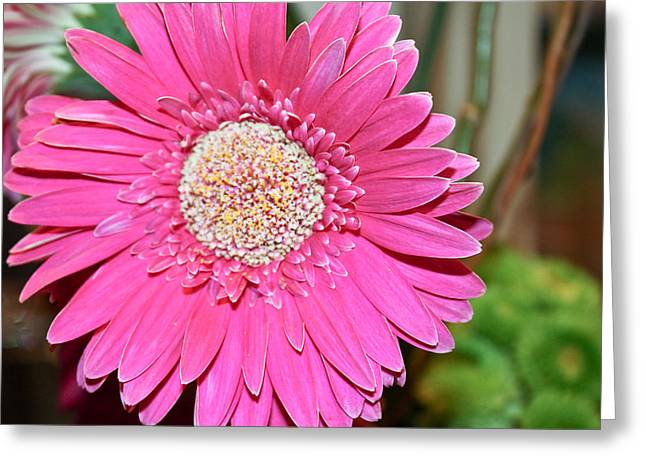 Greeting Card featuring the photograph Pink Gerbera Daisy by Ann Murphy