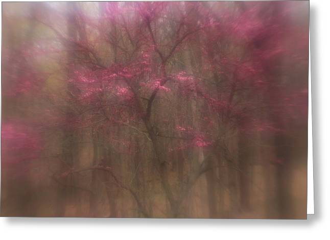 Greeting Card featuring the photograph Pink Haze by Coby Cooper