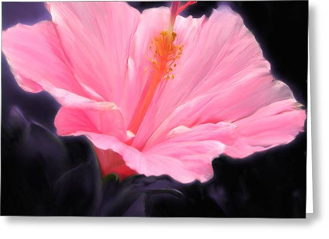 Pink Hibiscus Greeting Card by Marcos Porcayo