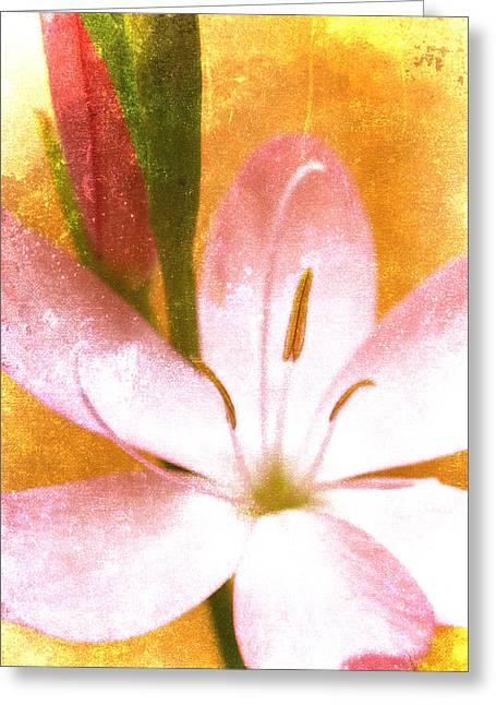 Pink Iris On Orange Greeting Card by Carol Leigh