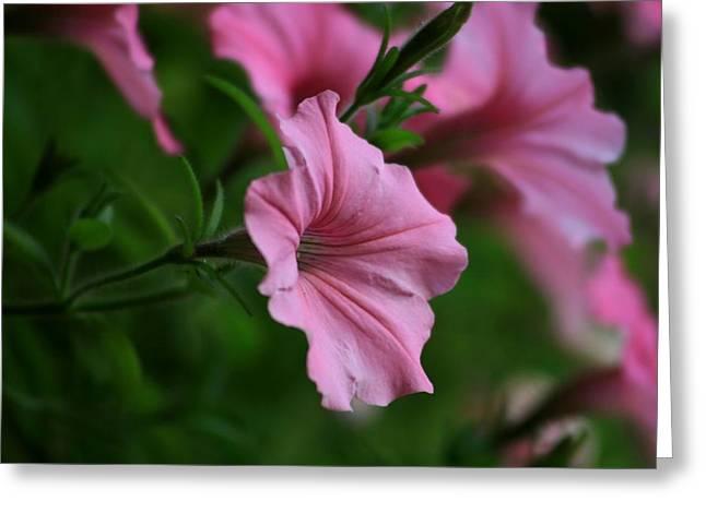 Pink Ladies Greeting Card by Valia Bradshaw