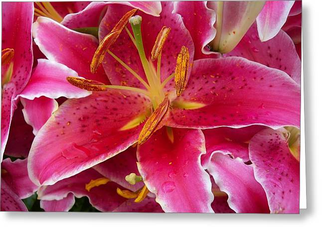 Pink Lily With Water Droplets Greeting Card