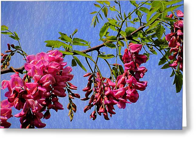 Pink Locust Blossoms Greeting Card