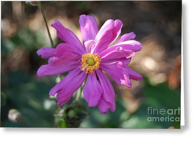 Pink Macro Greeting Card