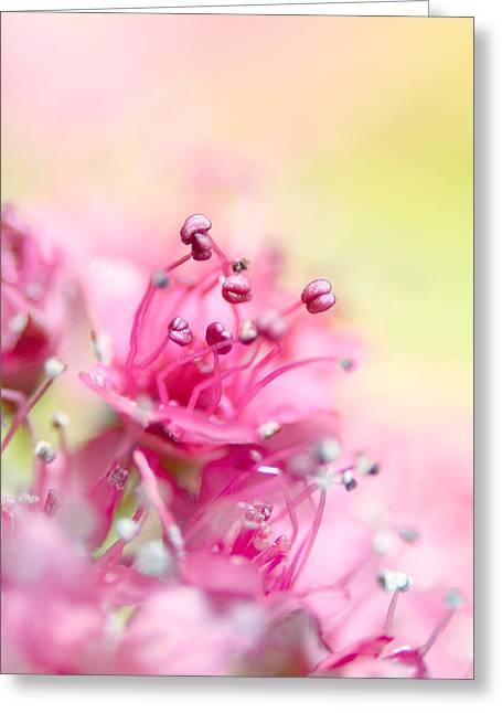 Pink Magic Greeting Card by Sharon Johnstone