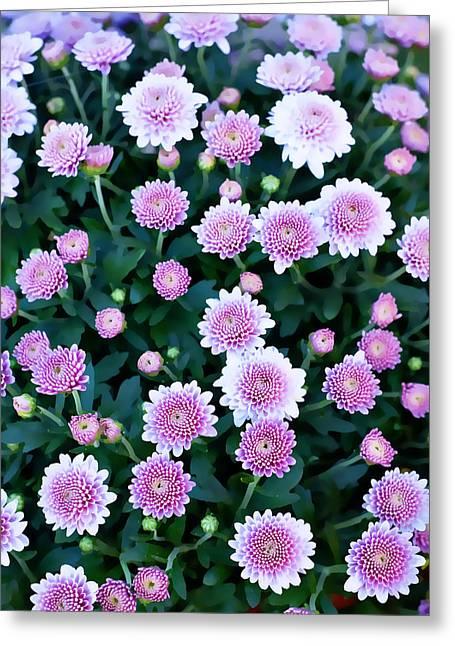 Pink Greeting Card by Malania Hammer