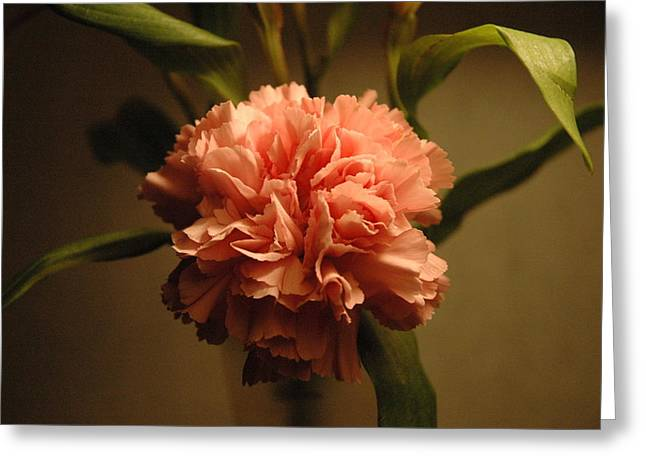Pink Marigold Flower Greeting Card by Rafael Figueroa