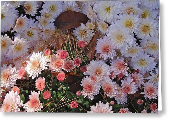 Greeting Card featuring the photograph Pink Mum by Joseph Yarbrough
