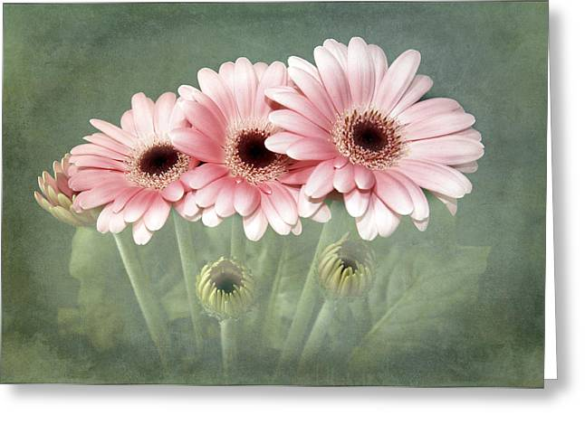 Pink On Green Greeting Card