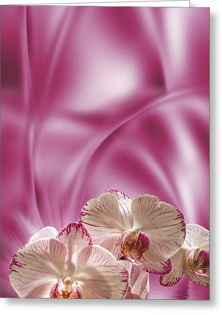 Greeting Card featuring the digital art Pink Orchid by Johnny Hildingsson