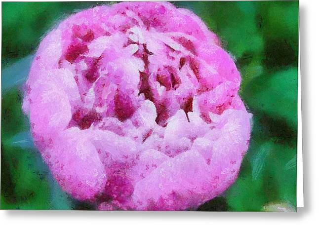 Pink Peony Greeting Card by Elizabeth Coats