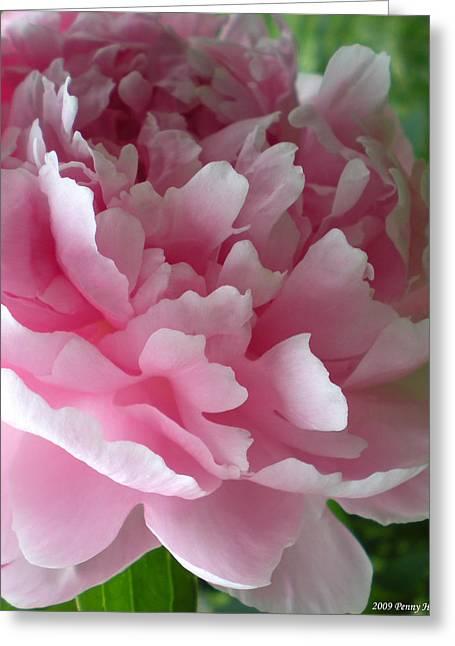 Pink Peony Greeting Card by Penny Hunt