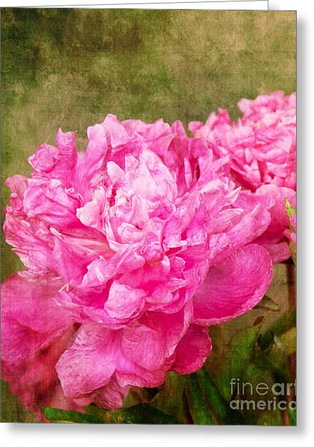 Pink Peony Texture 3 Greeting Card by Bob and Nancy Kendrick