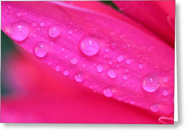 Pink Petal Waterdrops Greeting Card