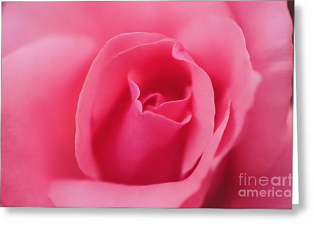 Pink Precious Powerful Rose Greeting Card by Clayton Bruster
