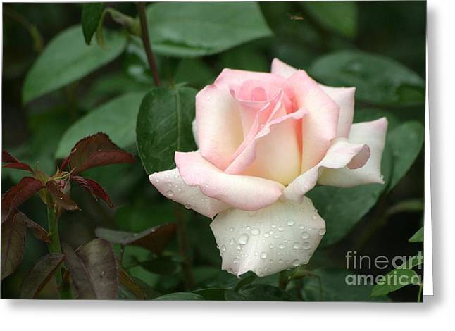 Pink Promise Greeting Card by Living Color Photography Lorraine Lynch