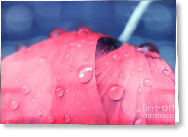 Pink Puppie Greeting Card by Soultana Koleska