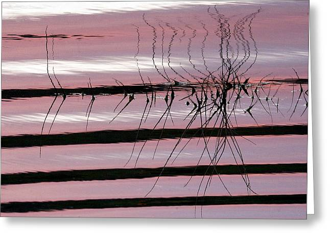 Pink Refections Greeting Card by James Steele