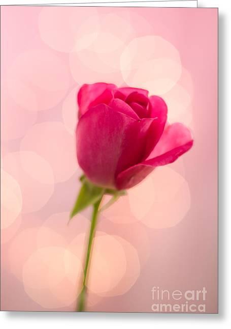 Pink Rose Bud Bokeh Greeting Card