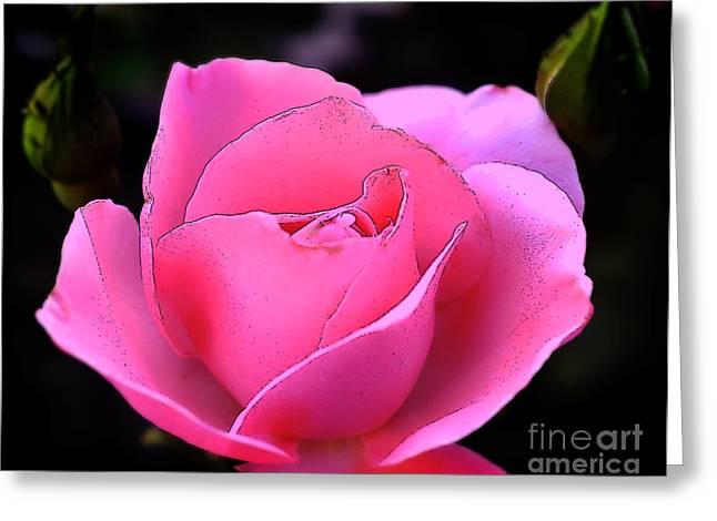 Greeting Card featuring the photograph Pink Rose Day by Clayton Bruster