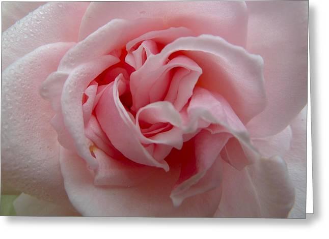 Pink Rose Greeting Card by Debra Collins