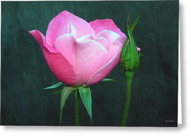 Greeting Card featuring the photograph Pink Rose by George Bostian
