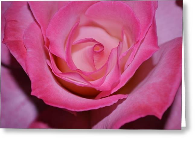 Pink Rose Greeting Card by Saifon Anaya