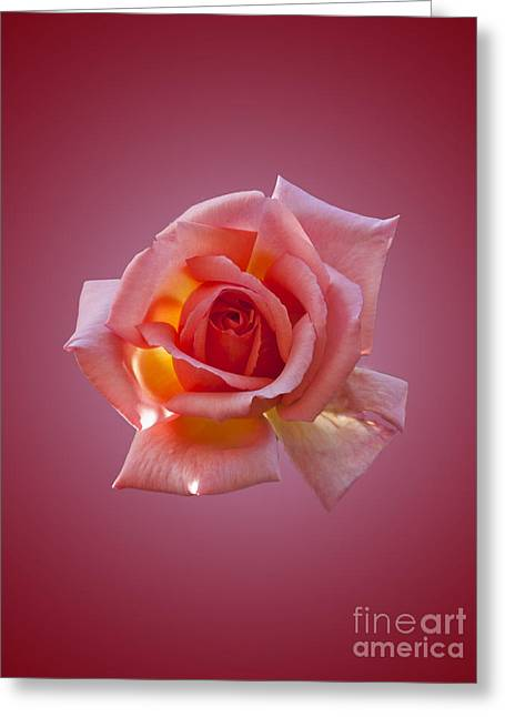 Pink Rose Greeting Card by Steev Stamford