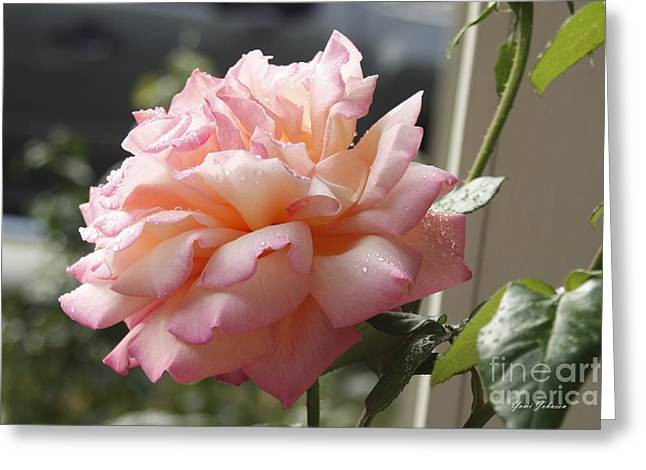 Greeting Card featuring the photograph Pink Rose  by Yumi Johnson