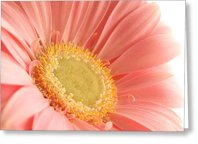 Pink Sherbert Blossom Greeting Card