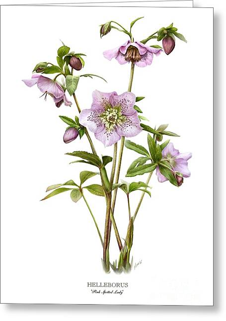 Pink Spotted Lady Hellebores Greeting Card