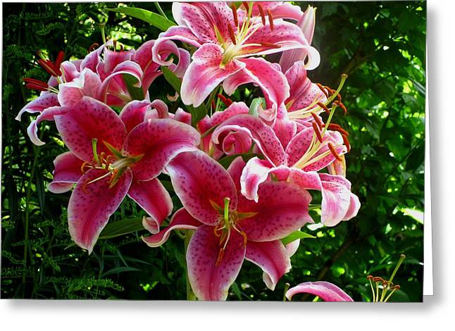 Pink Tiger Lilies Greeting Card by Kathy Long