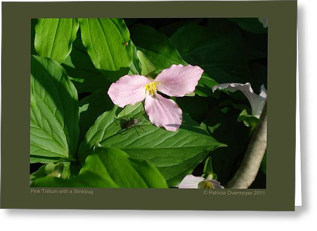 Greeting Card featuring the photograph Pink Trillium Witha Stinkbug by Patricia Overmoyer