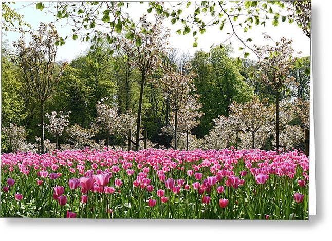 Pink Tulips And Blossom 2 Greeting Card