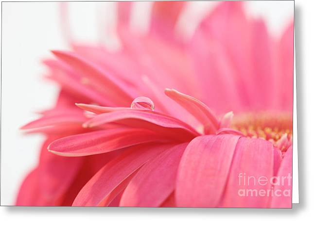 Pink Water Drop Greeting Card by Kim Fearheiley