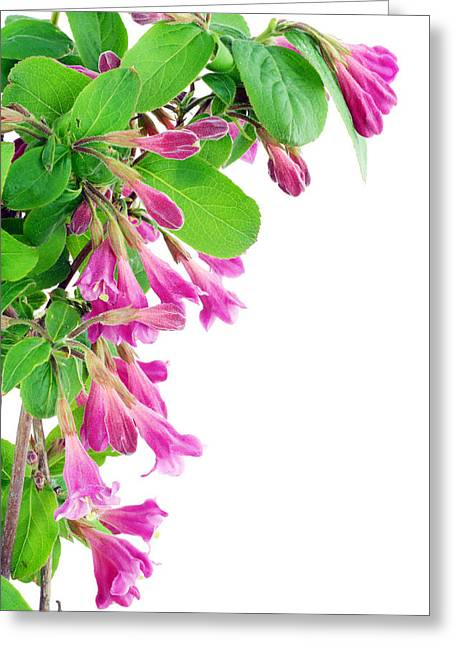 Greeting Card featuring the photograph Pink Weigela Postcard by Aleksandr Volkov