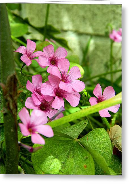 Greeting Card featuring the photograph Pink Wild Flowers by Ester  Rogers