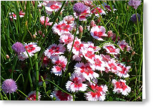 Pinks In The Clover Grass Greeting Card by Jeanette Oberholtzer
