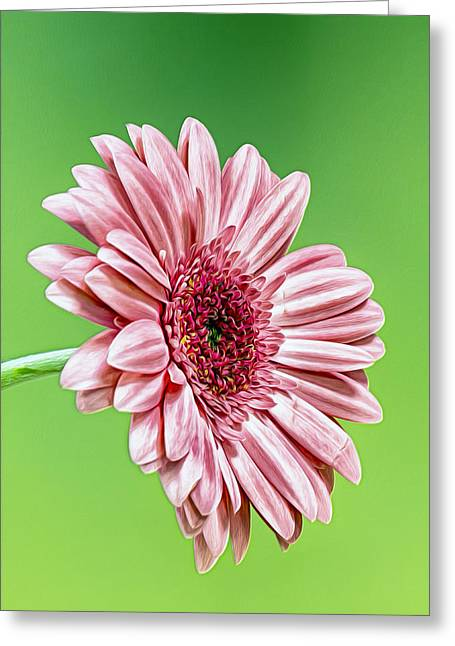 Pinky On Lime Greeting Card by Bill Tiepelman