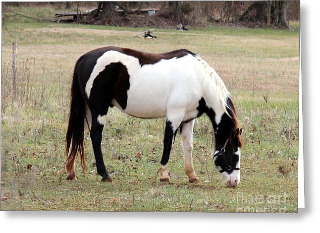 Pinto Greeting Card by Lorraine Louwerse