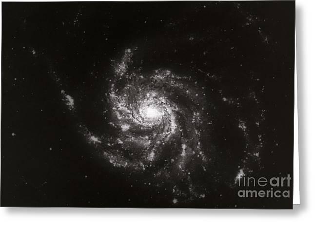 Pinwheel Galaxy, M101 Greeting Card by Science Source