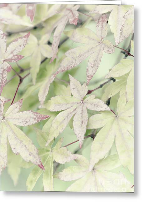 Pistachio Maple Greeting Card by David Lade